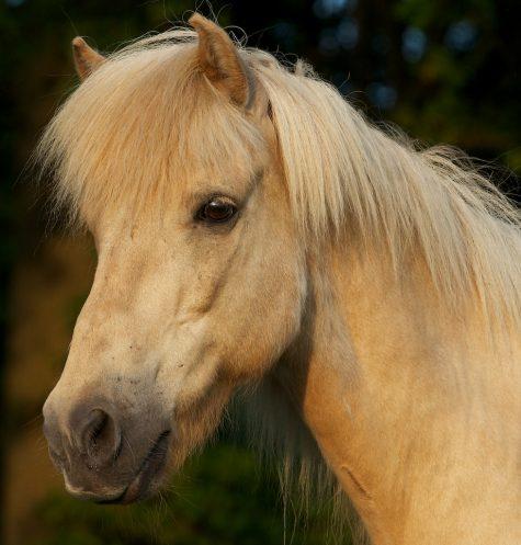 paard I
